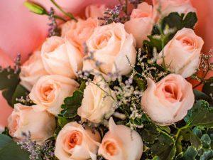 Pink Roses Delivery Bangkok